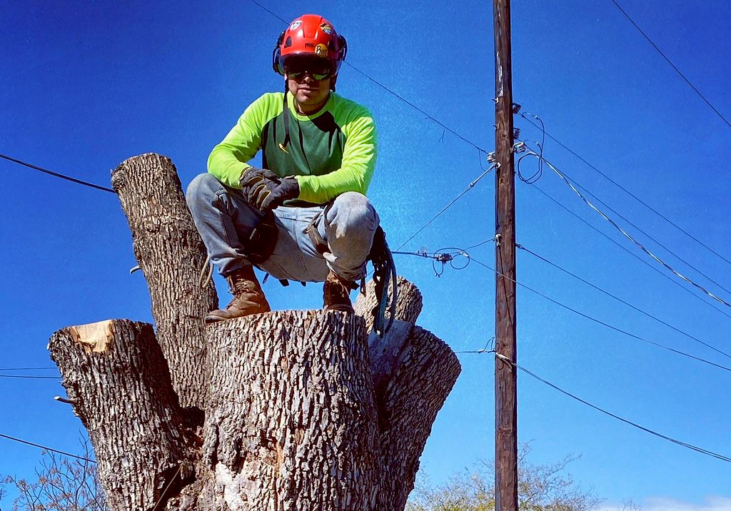 O.C.S. Tree Svc