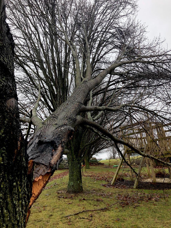 Wind damaged trees