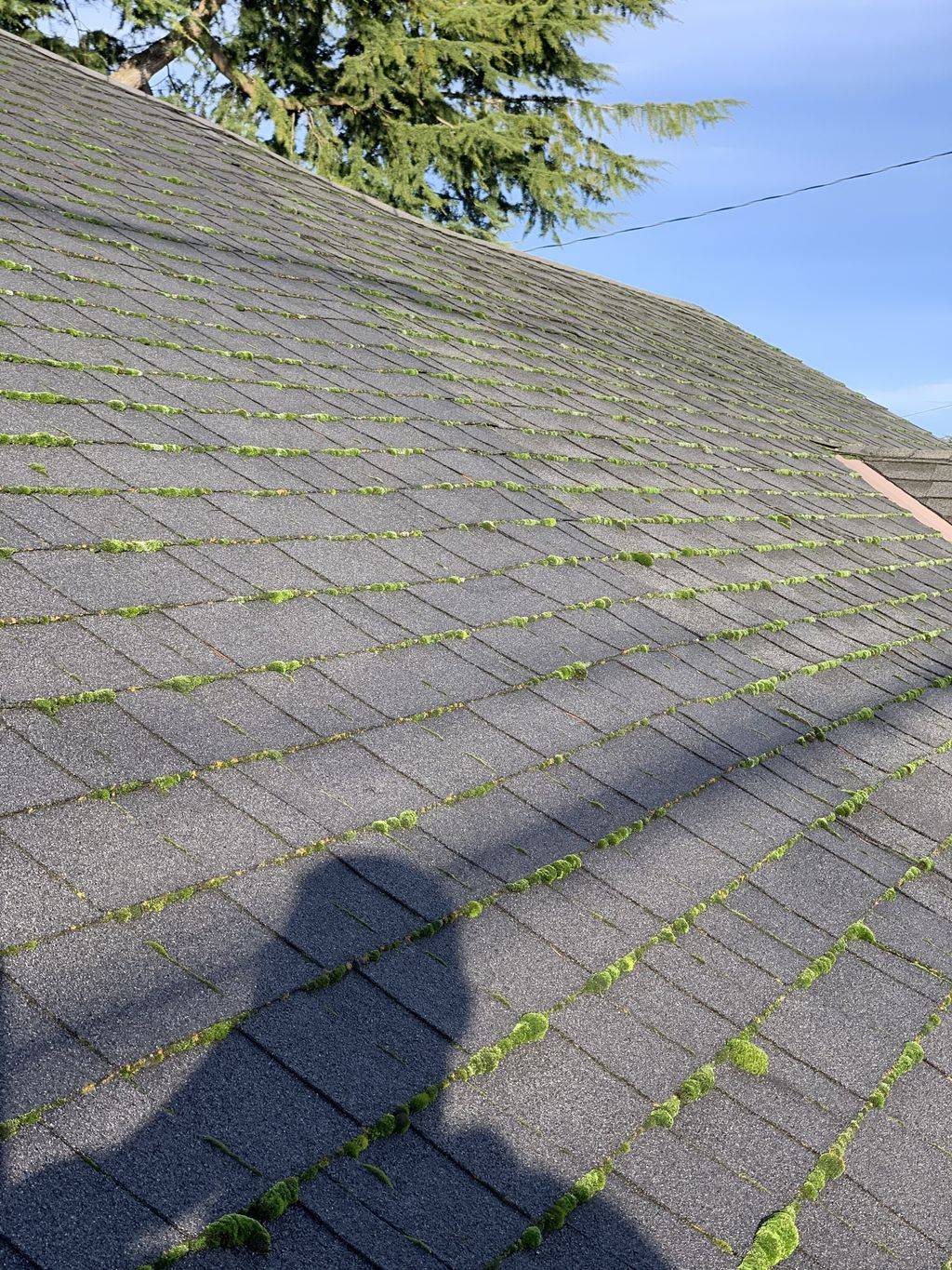 Roof cleaning and  moss treatment