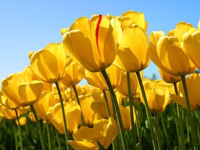 Avatar for Spring Fresh Cleaning Erie, MI Thumbtack