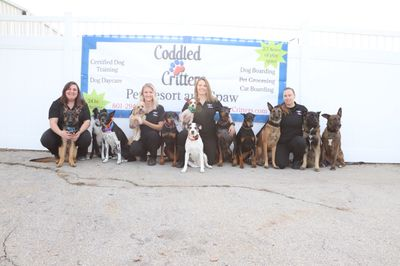 Avatar for Dog Trainer @ Coddled Critters Pet Resort and Spaw North Salt Lake, UT Thumbtack