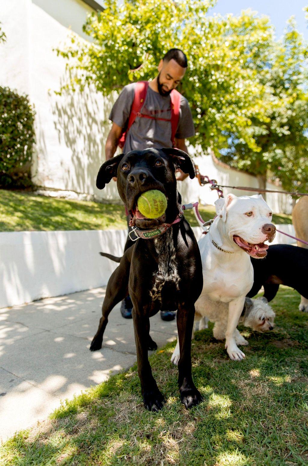 Uncle Kenny's Pet Sitting & Dog Walking