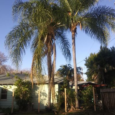 Avatar for All in 2 Tree Service Monrovia, CA Thumbtack