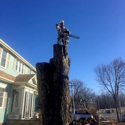 Avatar for Up In the Air Tree Care Walpole, MA Thumbtack