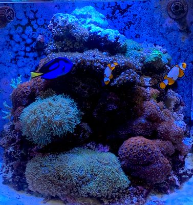 Avatar for Amazing Reef Life Aquarium Service