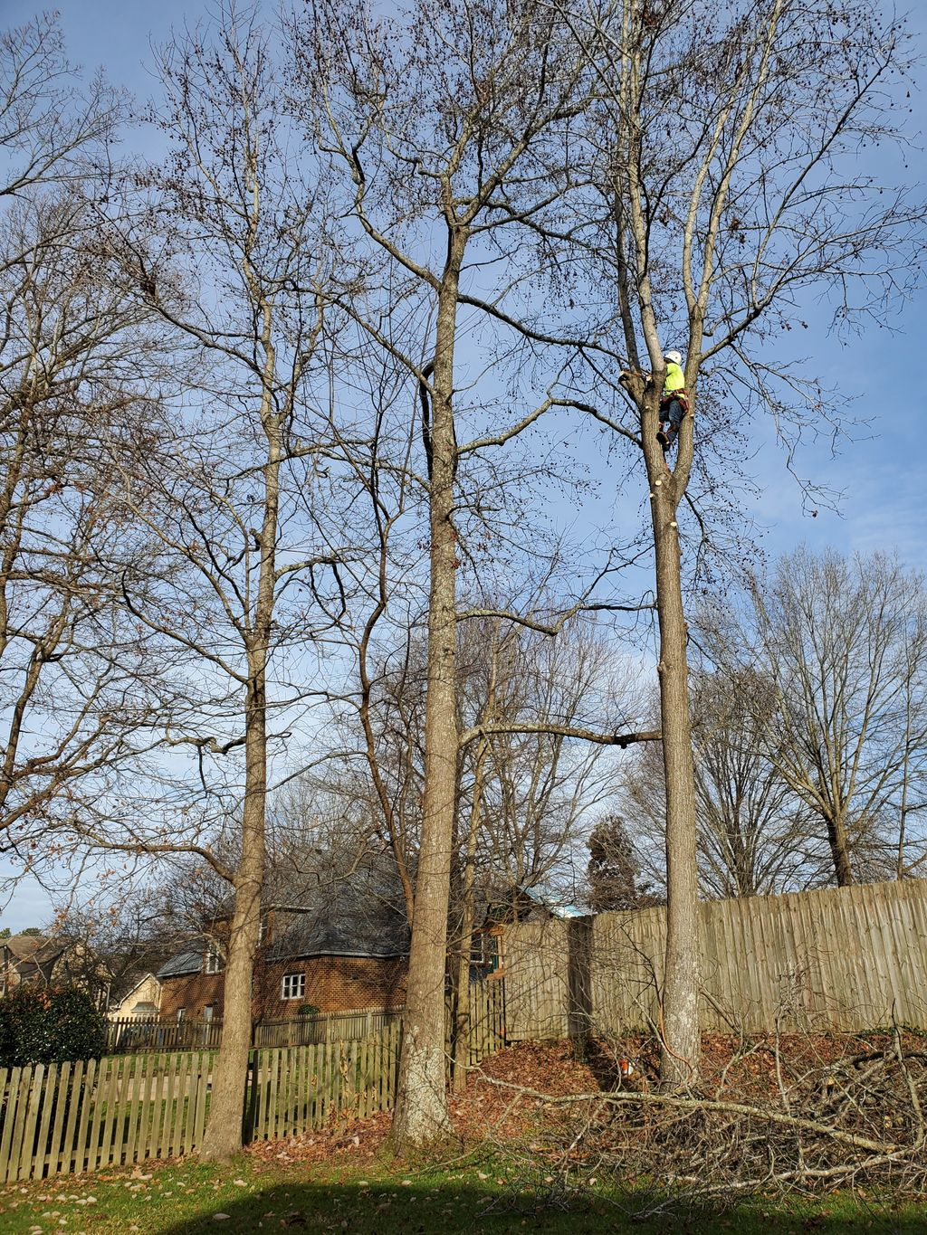 Trees removal  and stumps
