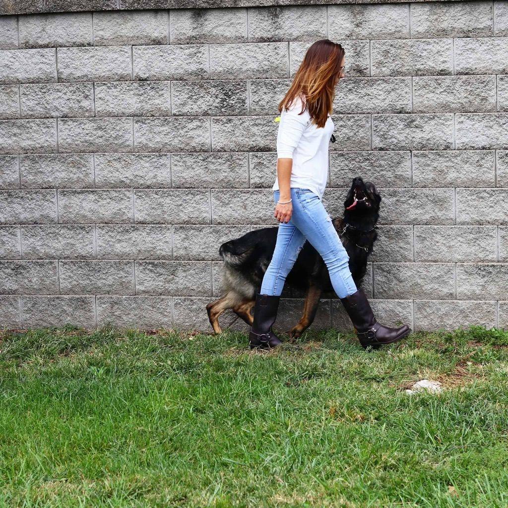 Kurtz K-9's dog training