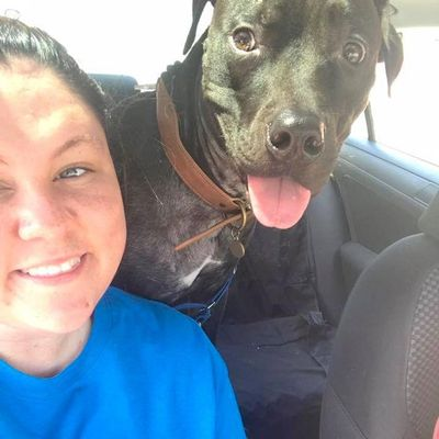Avatar for About Judah K9 Talbott, TN Thumbtack