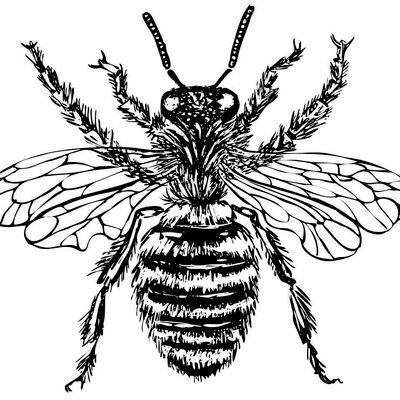 Avatar for The Bee Man, LLC Canfield, OH Thumbtack