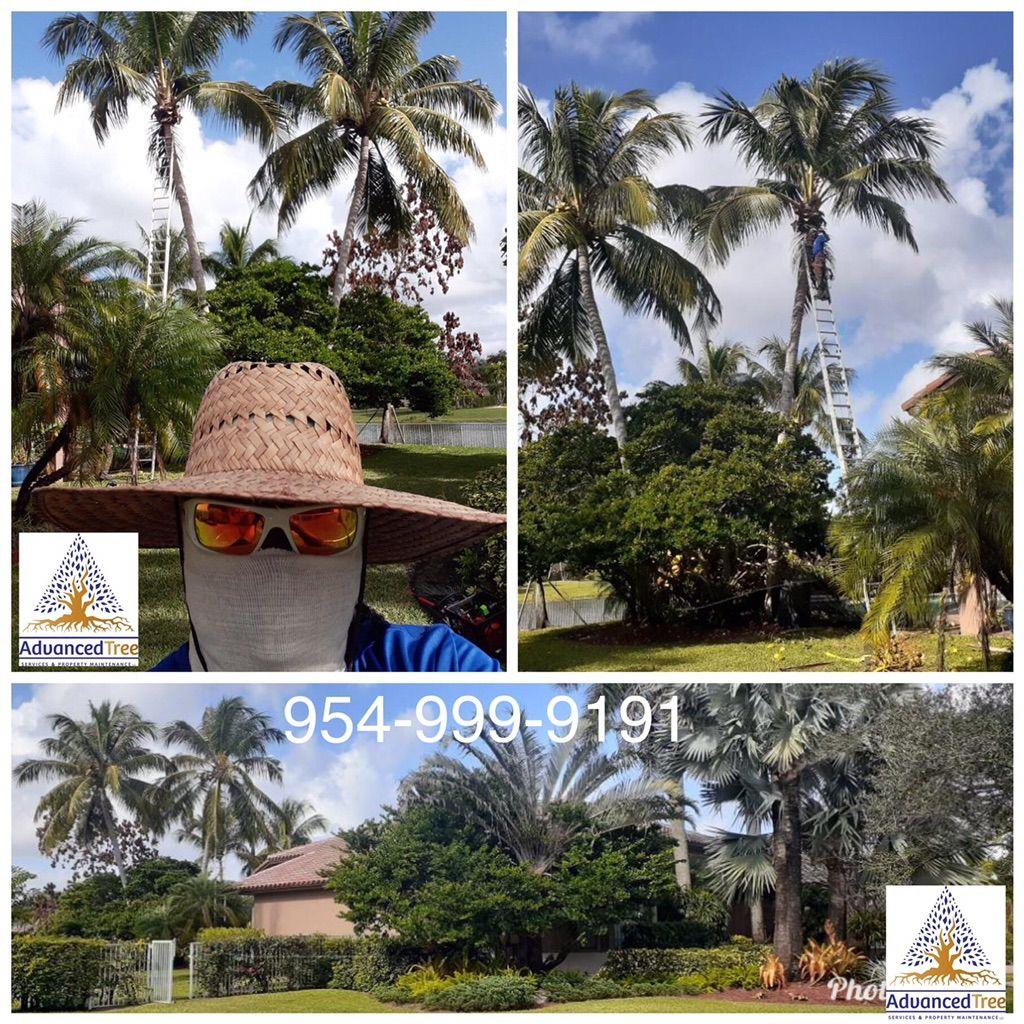 Advanced Tree Services & Property Maintenance LLC