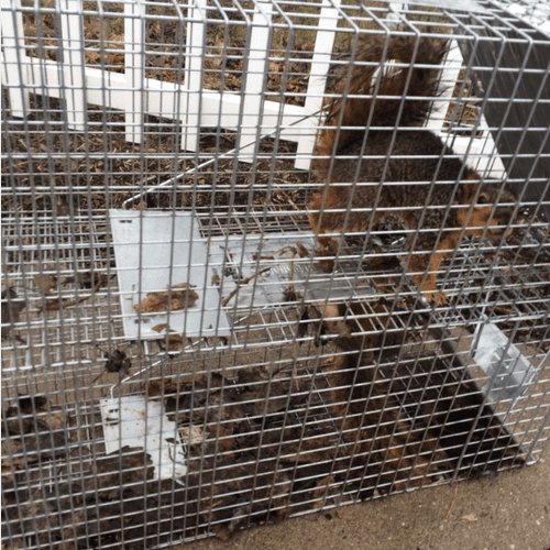 Trapped Squirrels