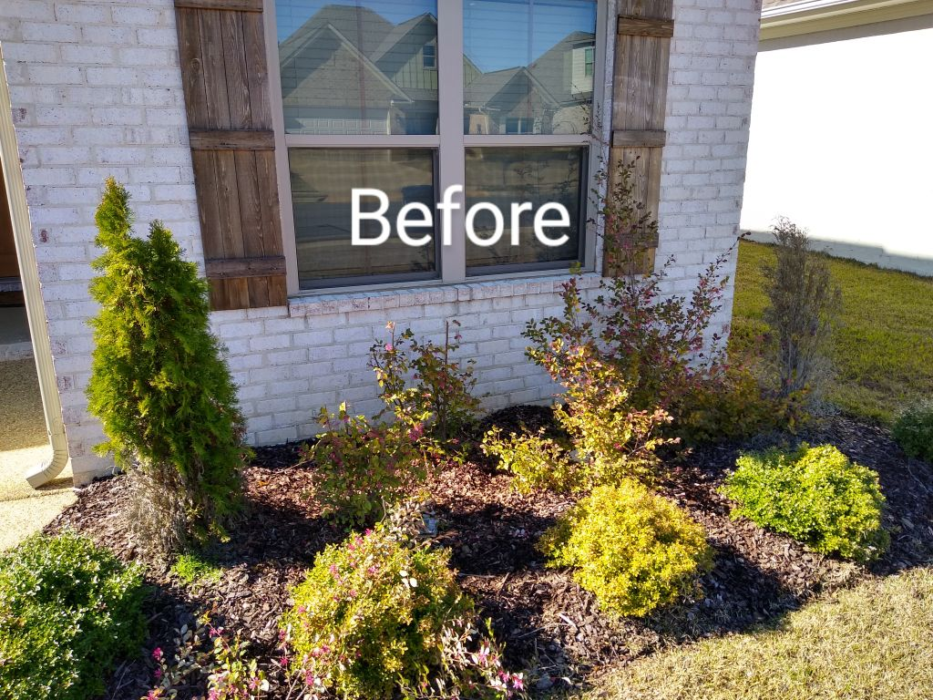 Pruning and Plant Removal
