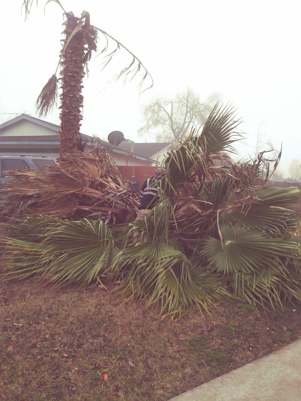 Cut palms