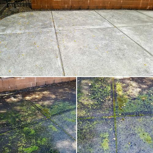 This concrete path cleaned up quite nicely. Pressure washed the whole area and used a bleach solution to properly neutralize the mildew.