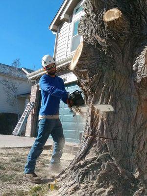 Avatar for Mack's Tree Care Colorado Springs, CO Thumbtack