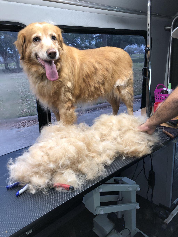 Dog Grooming - Houston 2020