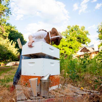 Avatar for NATURAL HONEY BEE Salt Lake City, UT Thumbtack