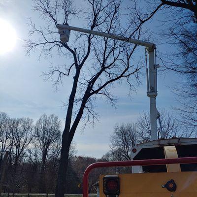 Avatar for joe's tree care Harrisburg, NC Thumbtack