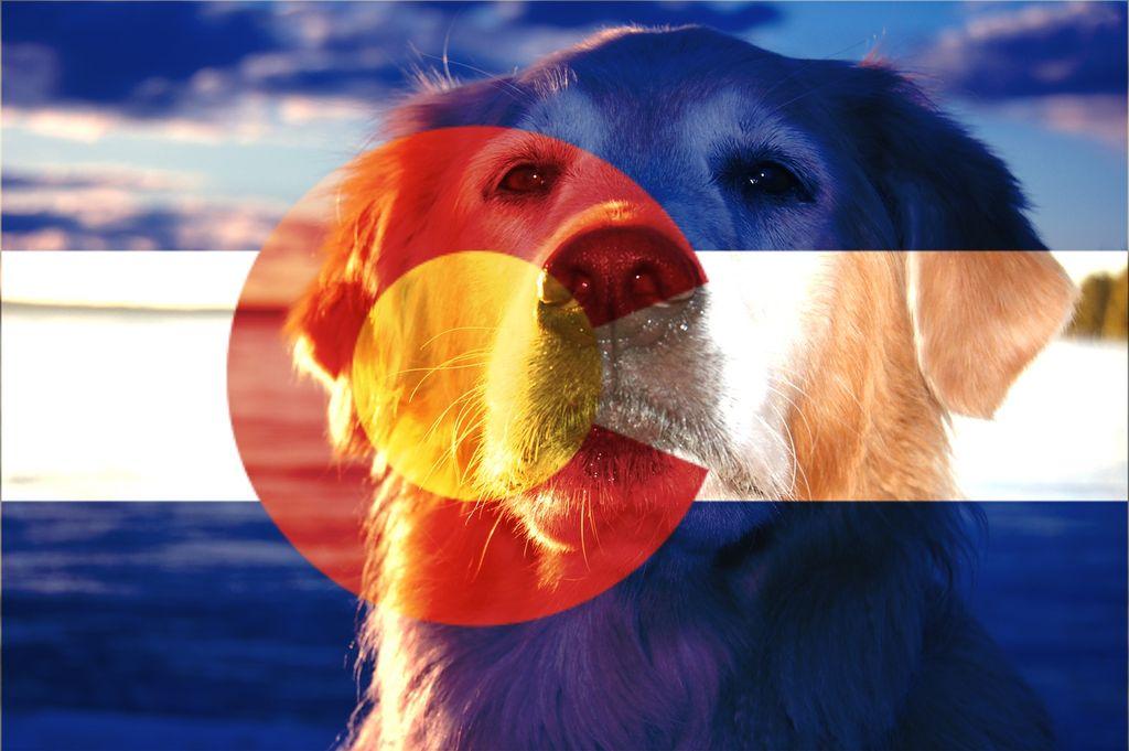 Collarado Canine Care