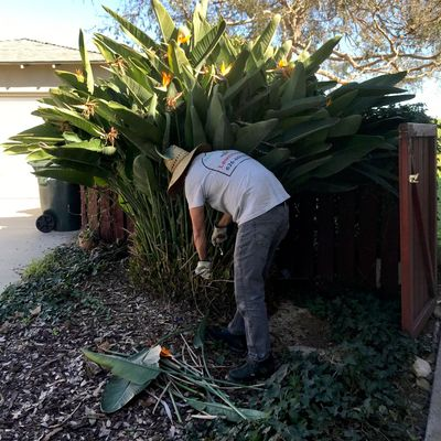 Avatar for Leo's Gardening Service's La Puente, CA Thumbtack