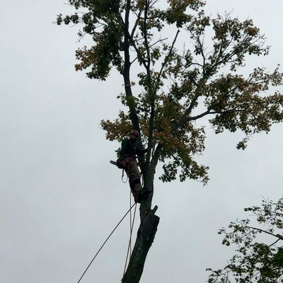 Avatar for Adams tree service Middlesex, NJ Thumbtack