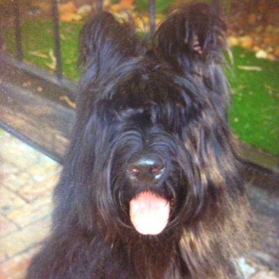 Avatar for Bob's Dog Training Jupiter, FL Thumbtack