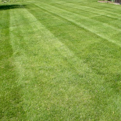 Our lawn pros are fully vetted, insured and have an average of 12 years experience!