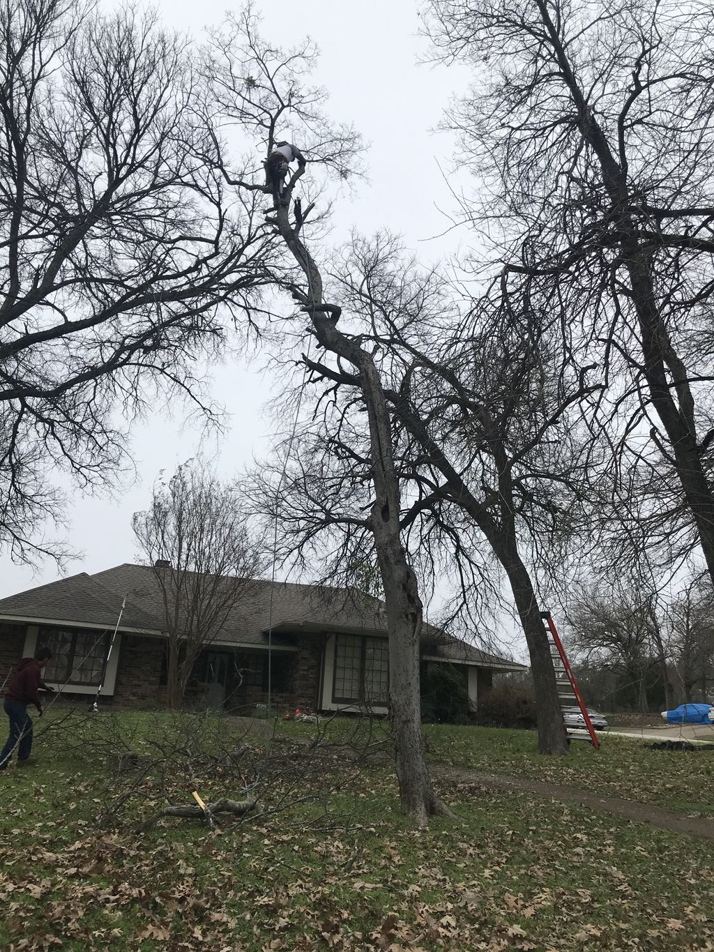 Tree Trimming and Removal - Lancaster 2020