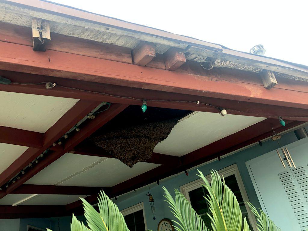 Patio roof repair