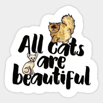 Avatar for All Cats Are Beautiful Cat Grooming Las Vegas, NV Thumbtack