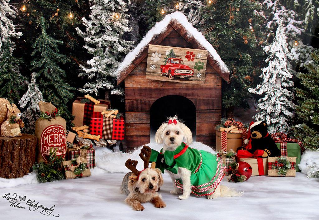 Christmas & Winter Minis