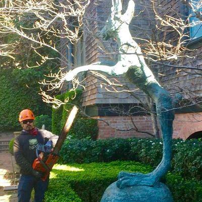 Avatar for Torres landscaping &Tree care Half Moon Bay, CA Thumbtack