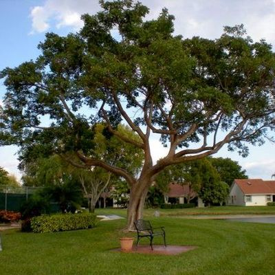 Avatar for Community Tree & Landscape Service, Inc. West Palm Beach, FL Thumbtack