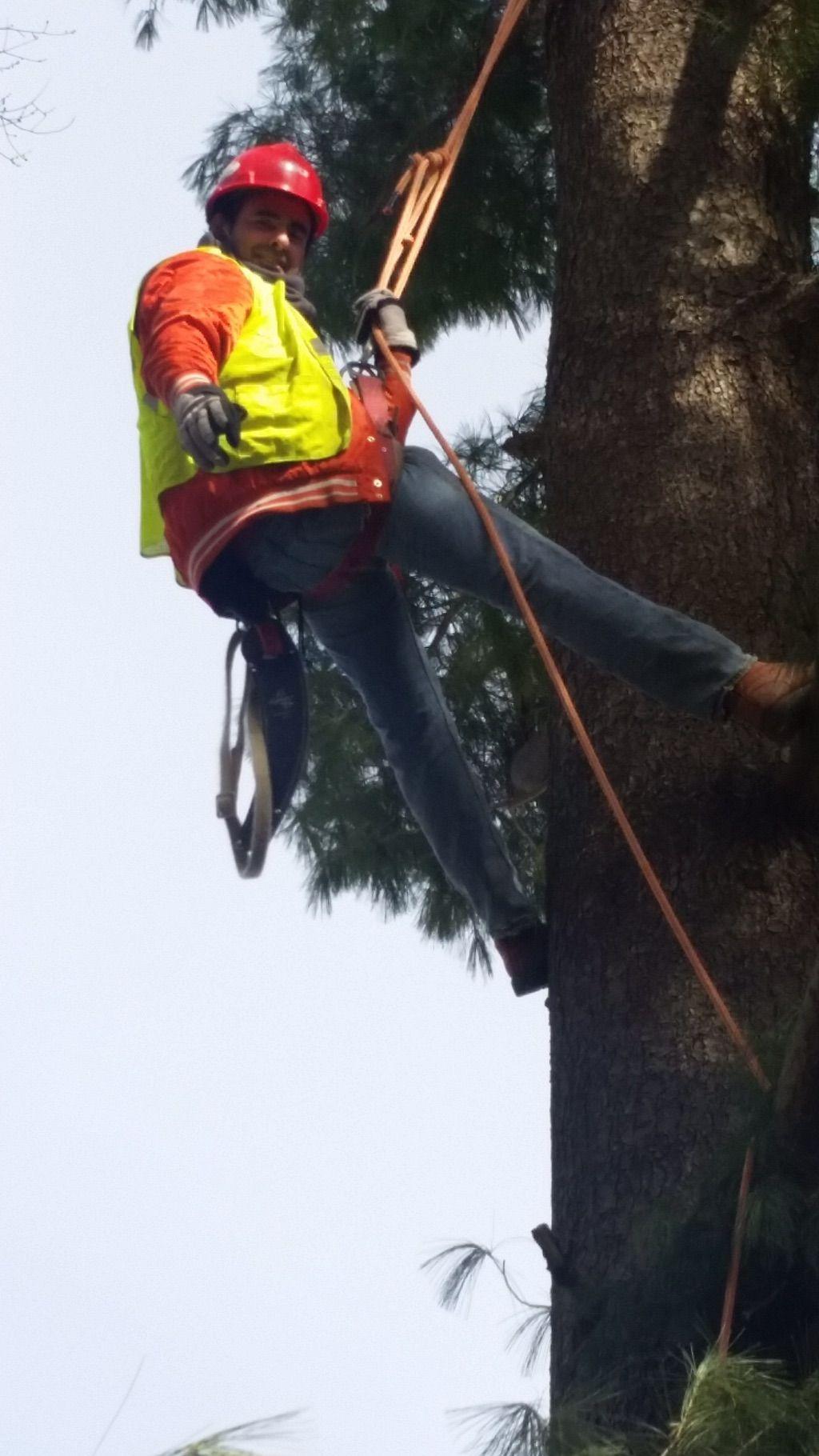 jose tree service