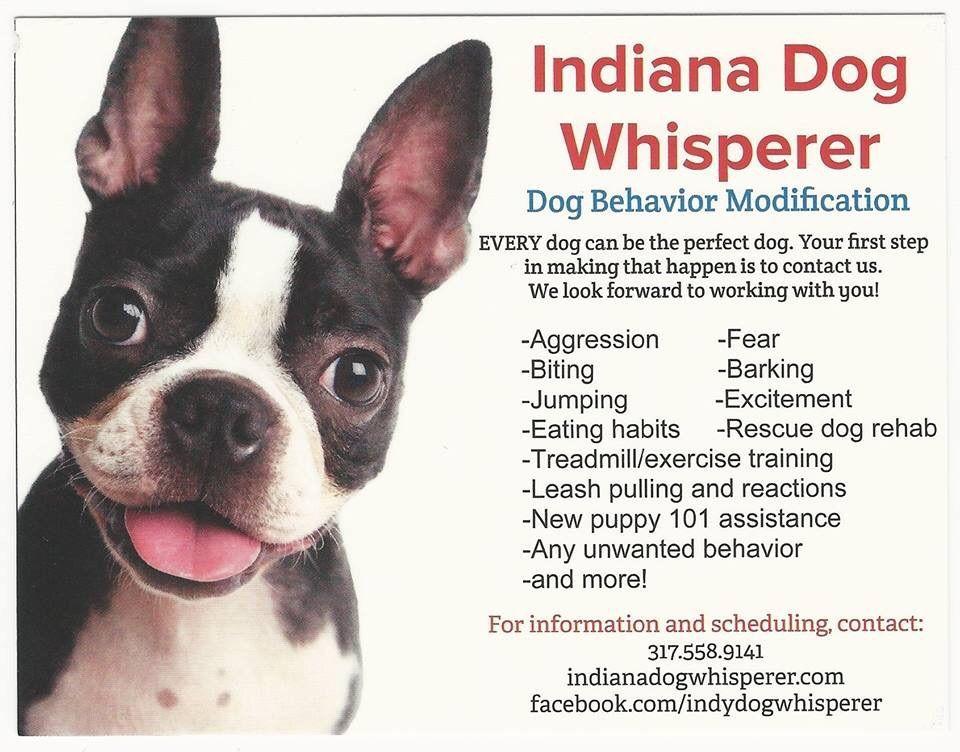 Indiana/Ohio Dog Whisperer
