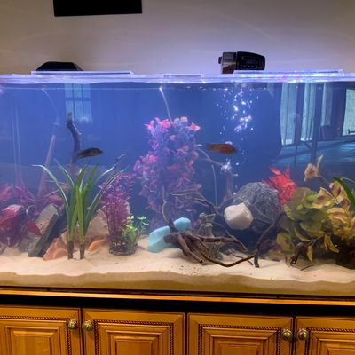 Avatar for Brianas Aquariums Clifton Heights, PA Thumbtack