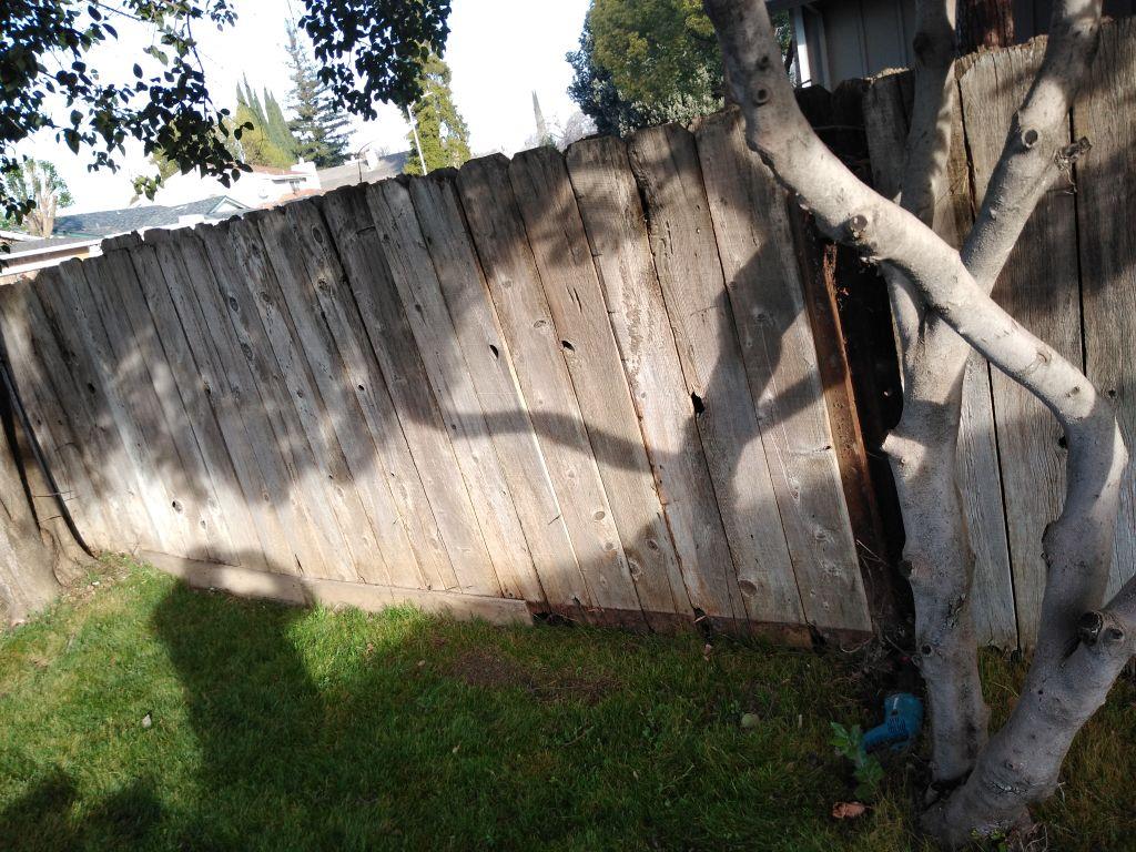 New Redwood Fence