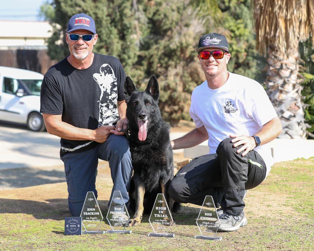 Leashless Dog Training