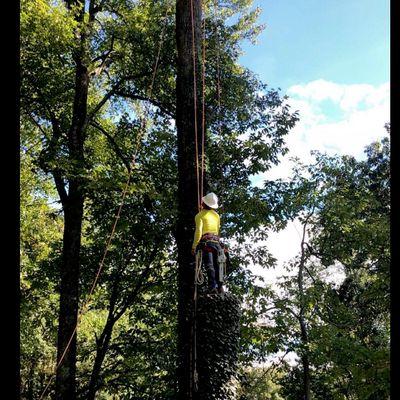 Avatar for Y Professional Tree Service Crossville, AL Thumbtack