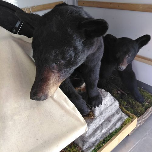 moving bears and pianos