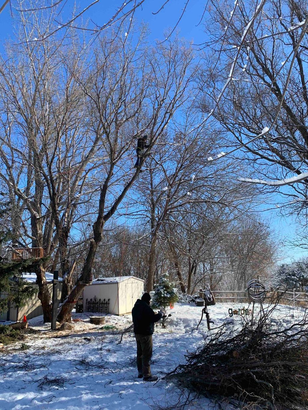 Tree Trimming and Removal - Minneapolis 2020