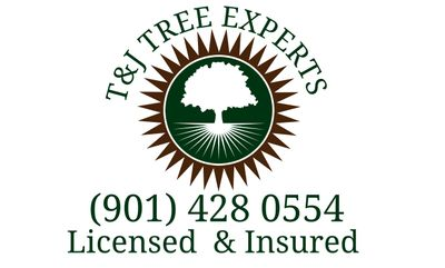 Avatar for T & J Tree Experts Cordova, TN Thumbtack