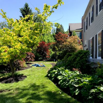 Avatar for Grass monkey lawn care and maintenance Baltimore, MD Thumbtack