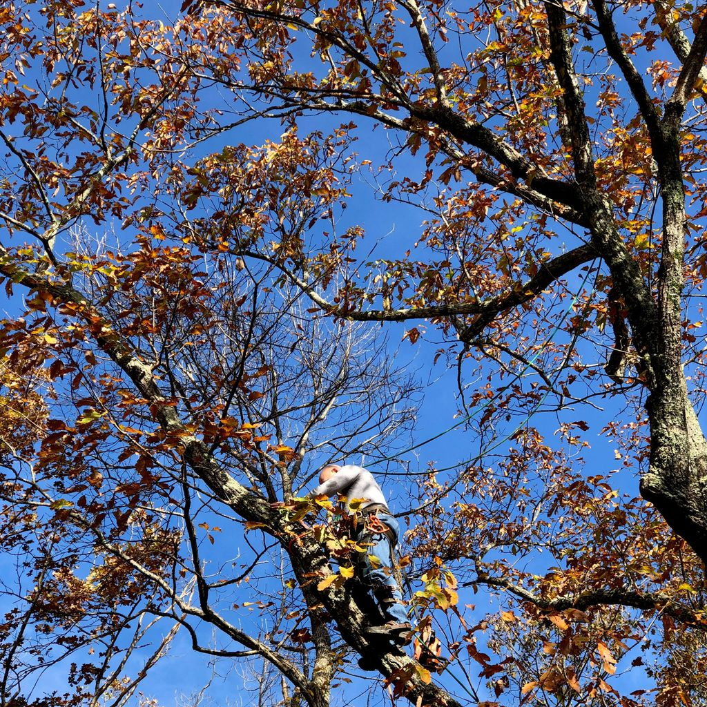 Bledsoe Tree Service