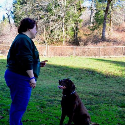 Avatar for Through the Leash  Dog Training