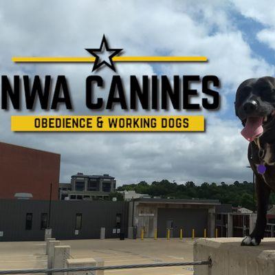 Avatar for NWA Canines Farmington, AR Thumbtack