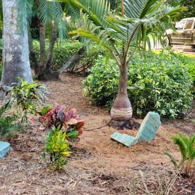 """Avatar for ParadiseForge inc""""Create Paradise in your yard!"""""""