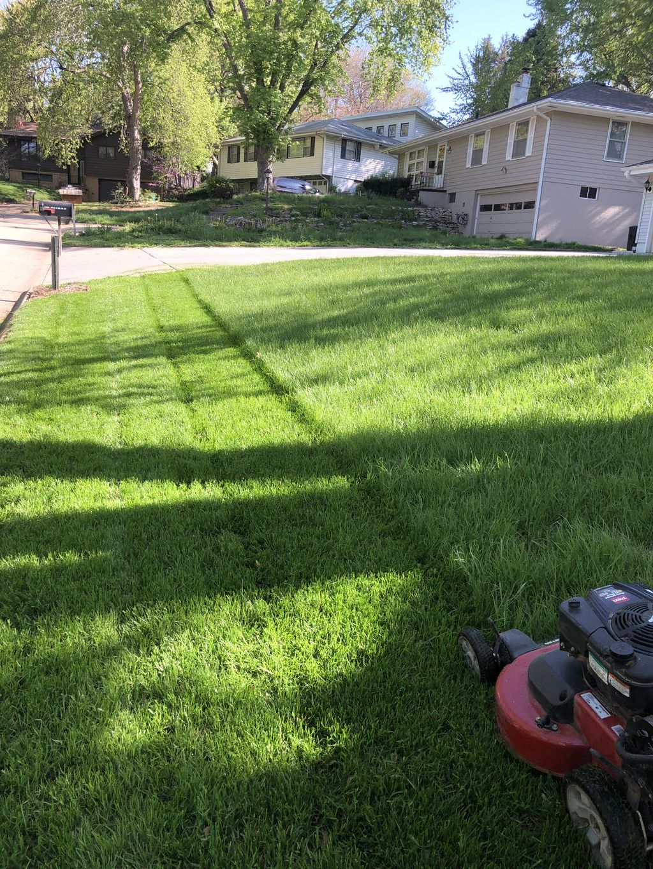 Full lawn cut
