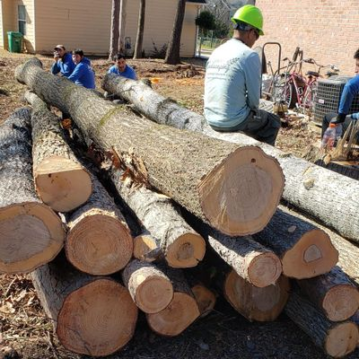 Avatar for Premier Grading & Tree removal