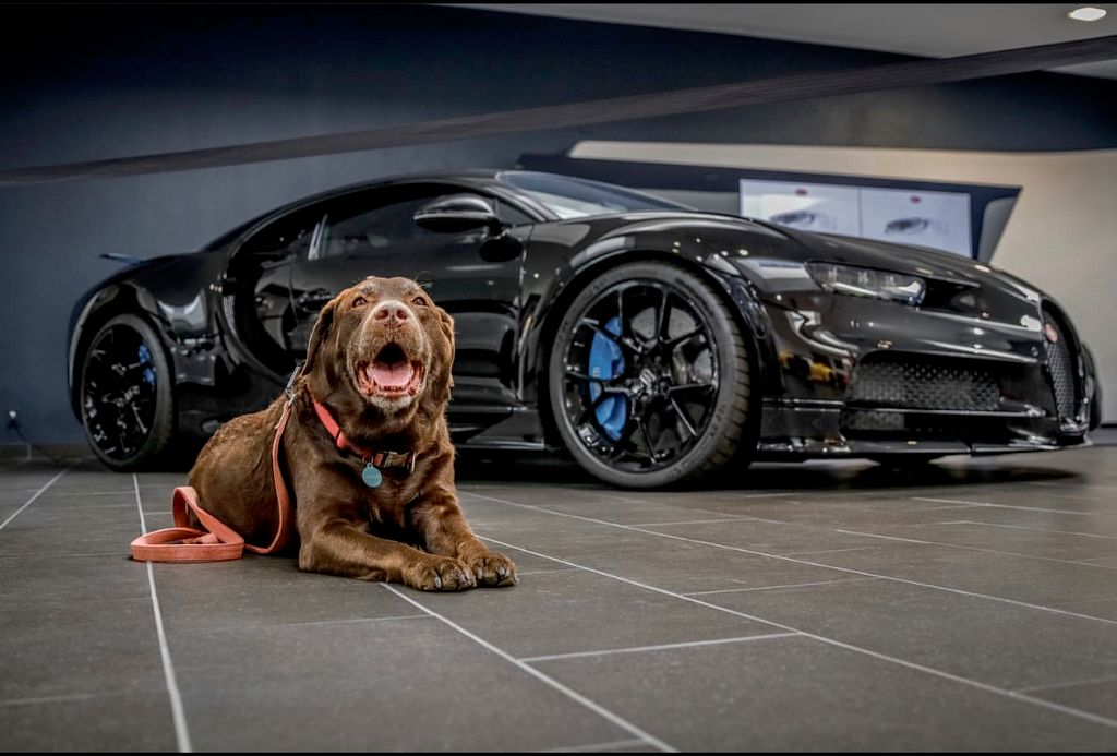 Car and Canines